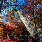 Mt.Wilson Autumn Colours by MiImages