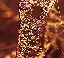There's a hole in my web....! by Steve Chapple