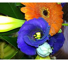 Fab Flowers Flaunting their Fantasticness Photographic Print