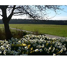 Spring Meadow Landscape - Roffey Park Photographic Print