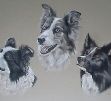 Border Collie Trio by Stephanie Greaves