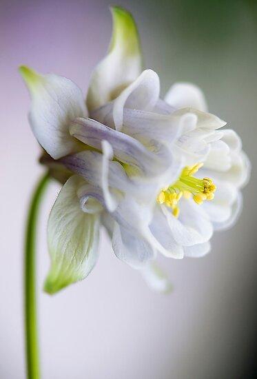 Spring Bonnet by Jacky Parker