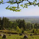 Dartmoor: Stone Circle on Chagford Common by Rob Parsons