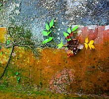 Old Wall Detail  by heatherfriedman