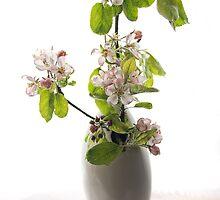 Apple Blossom by Ann Garrett