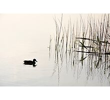 Peace and Simplicity Photographic Print