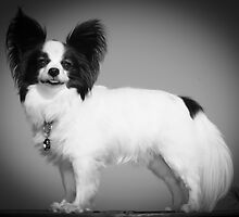 The posing pooch by AlexKokas