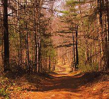 Narrow Road by CountryVistas