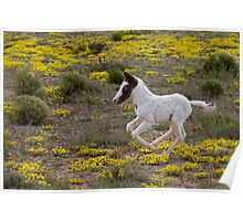 Wild Mustang Foal Poster