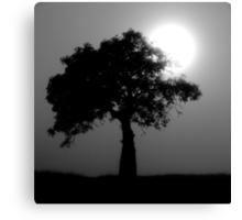 boab silhouette Canvas Print