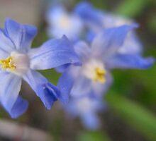 Starry Blue Flower Bokeh by MarianBendeth