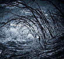 Dark Woods by Kory Trapane