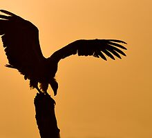 Vulture at Dawn - Samburu Kenya by Sue Earnshaw