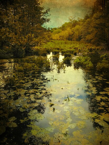 Wetlands by Jessica Jenney