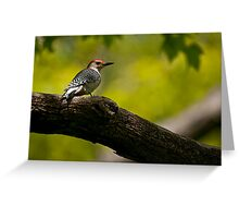 Red Bellied Woodpecker - Hamilton, Ontario Greeting Card