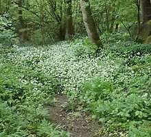 Path To Wild Garlic In Saltaire Woods by Sandra Cockayne