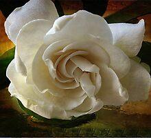 ~ Gardenia ~ by Brenda Boisvert