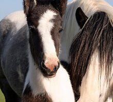 Mare & Foal by LisaRoberts