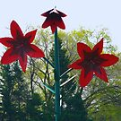 World's Largest Lily by MaeBelle