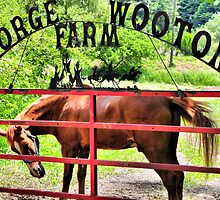 George Wooton Farm by Ann Eldridge