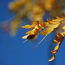 Golden and Blue by Catherine Davis