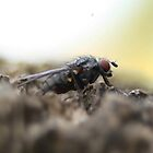Fly Guy. by Ryan Gilmour