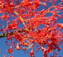 Bright Red Blooming flowers in the Sky by AlexKokas