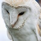Barn Owl by m4rtys
