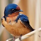 Barn Swallow in an Ontario Marsh by Jessica Dzupina