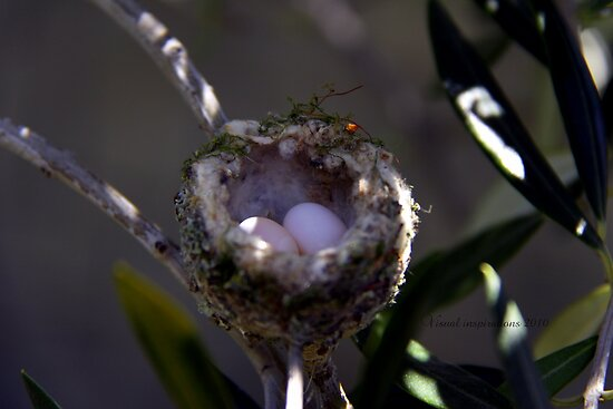 Hummingbird Nest by Visual   Inspirations