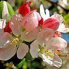 Spring Blossom by Marina Raspolich