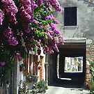 Bougainvillea and archway, Torre di Palme, Italy by Eros Fiacconi (Sooboy)