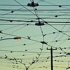 Wires & Sky by LeedenMoon