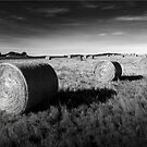 Hay by Kym Howard