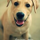 Labrador dog by growtograph