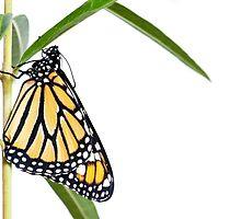 Butterfly Effect by Aaron Radford
