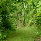 secret path by DarylE