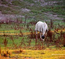 Horse Paddock in Yarra Brae by dazzleng