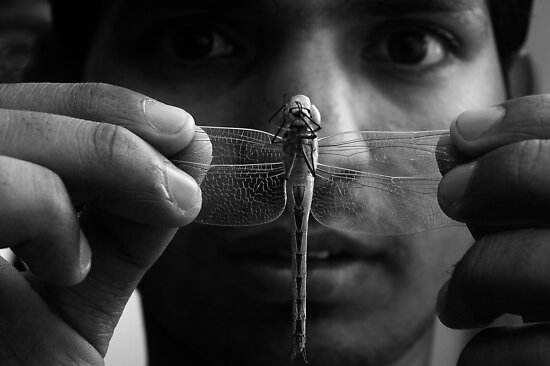 Dragonfly by Naveen  Sharma