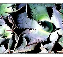 Agave #3 - Postcard by Michelle Bush