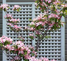 Pink Dogwood by Gregory Ewanowich