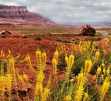Arizona Landscape by Barbara Manis