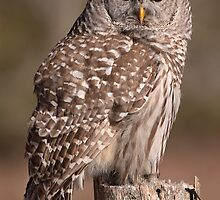 Fixated/Barred Owl by Gary Fairhead