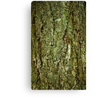 Bark in the forrest 1 Canvas Print