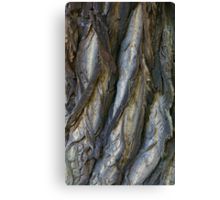 Bark in the forrest 3 Canvas Print