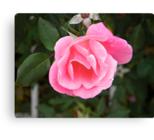 The Pink Promise Canvas Print