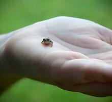Tiny Frog by photosbykt