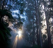 Mt Donna Buang in the Mist by Daniel Berends