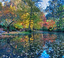 Autumn in the Dandenongs by Richard  Cubitt