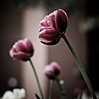 Tulips, Away by Kollaps-PQ
